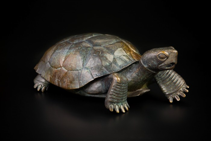 Peregrine OGormley Desert Tortoise