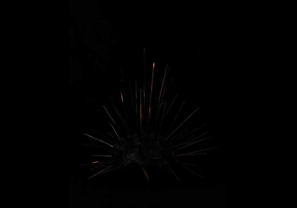 Sea Urchin, Black