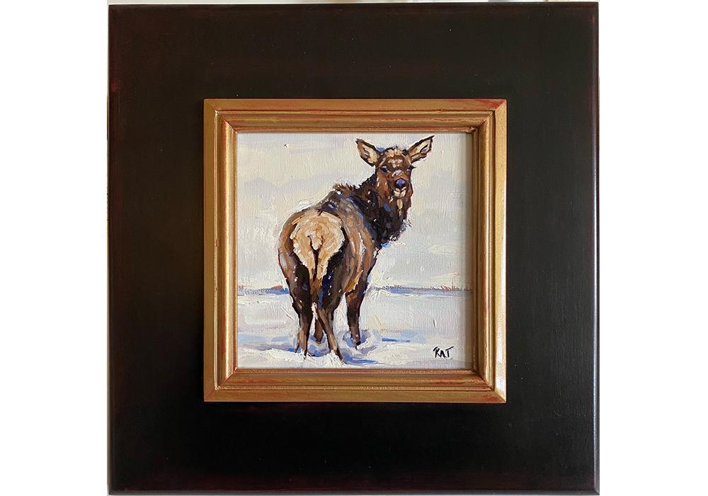 Casual Elk 1