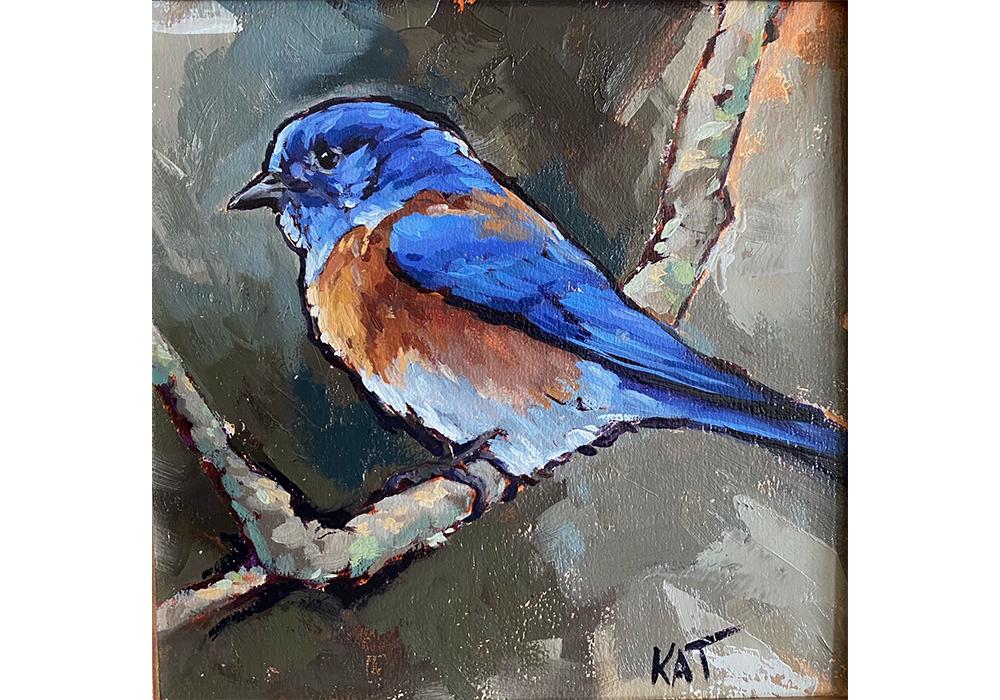 My western bluebird 2