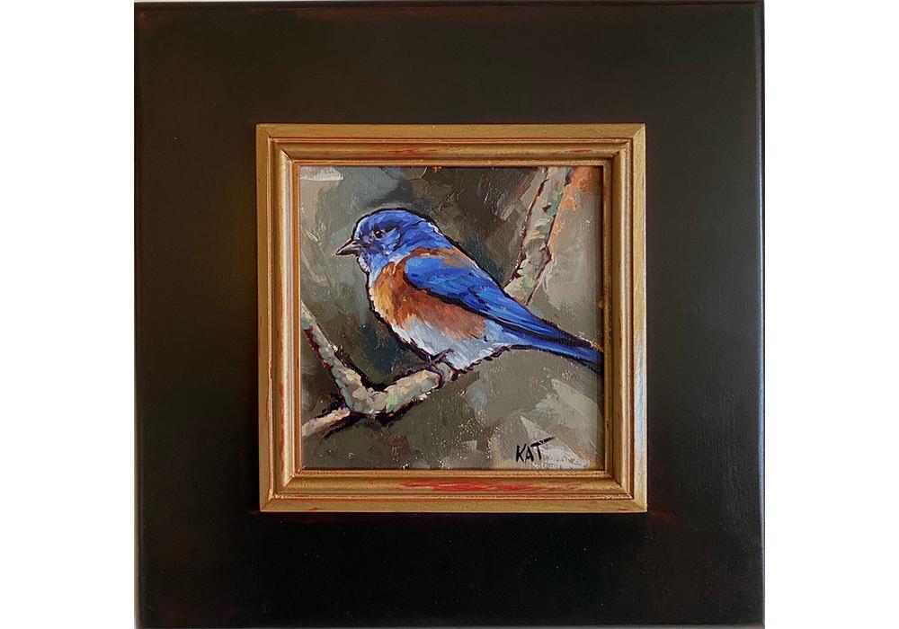 my western bluebird