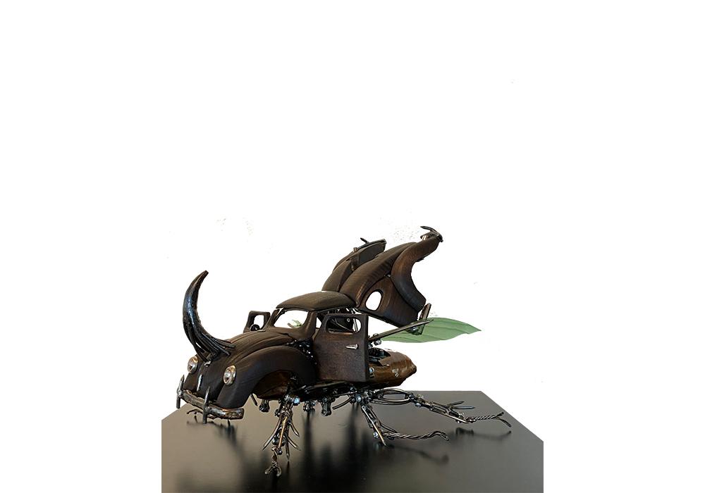 Beetle open WR